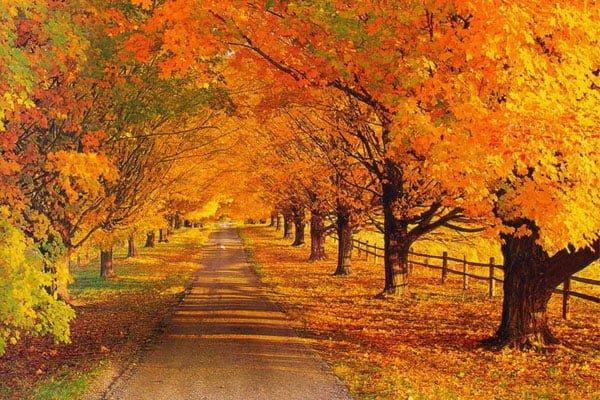 تخفیف پاییزی خرید هاست